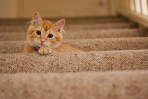 moving-checklist-taking-care-of-pets